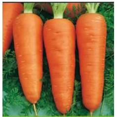Морковь Кампино /0,5кг Satimex/