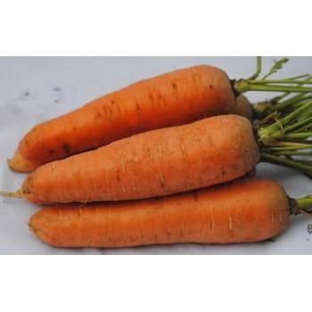 Морковь Курода /0,5кг Rem seeds/