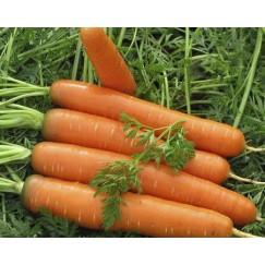 Морковь Красный Великан /0,5кг Satimex/