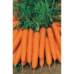 Морковь Нантская /0,5кг Rem seeds/