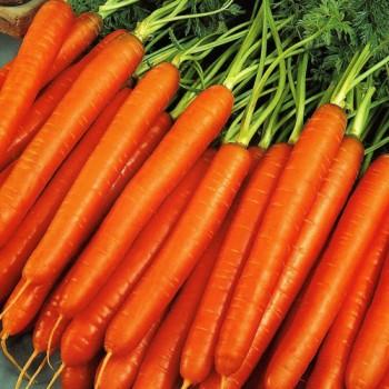 Морковь Нантская /0,5кг GSN/