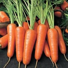 Морковь Роял Шантанэ /0,5кг Rem seeds/